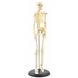 Esqueleto en Miniatura