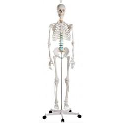 Esqueleto Oscar