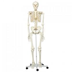 Esqueleto 3B