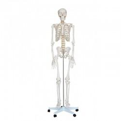 Esqueleto Tamaño natural 180cm